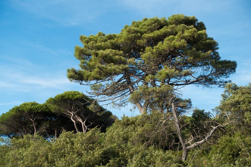 Parco Naturale della Maremma