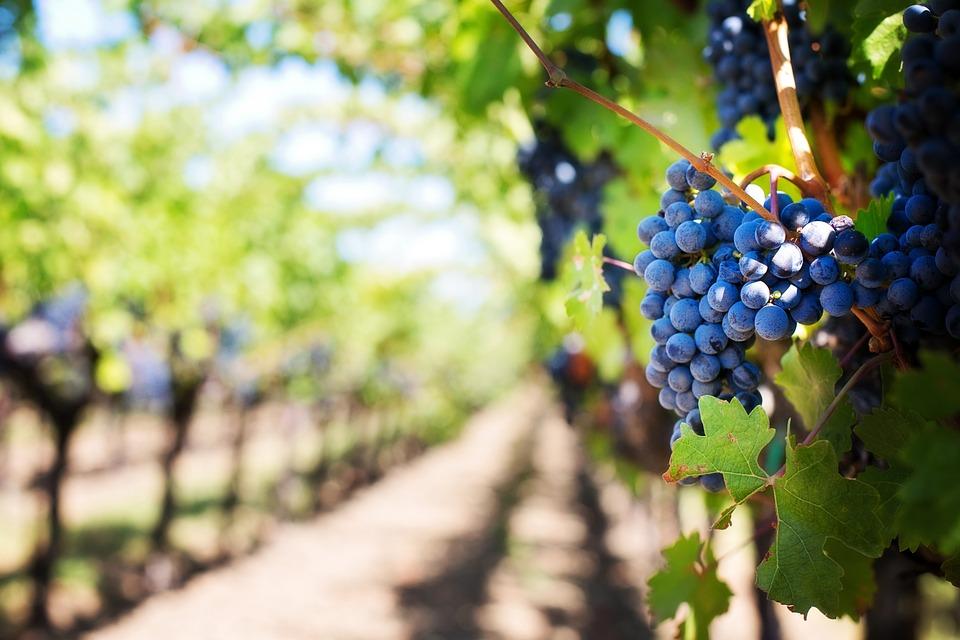 Strada del Vino Monteregio